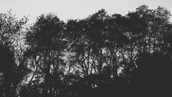 trees (1 of 2)