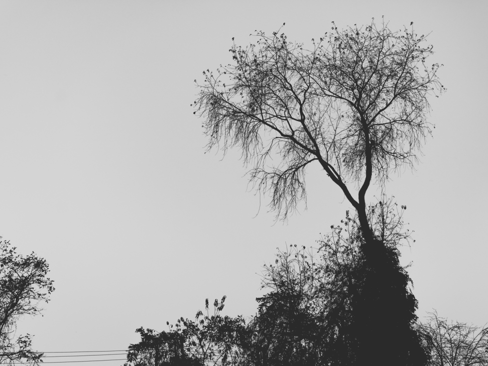 trees (2 of 2)